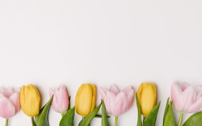 Picture flowers, spring, yellow, tulips, pink, fresh, yellow, pink, flowers, tulips, spring