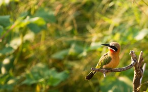 Picture light, bird, foliage, branch, yellow, bitches, bokeh, bright plumage
