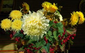 Picture berries, Bouquet, still life, chrysanthemum