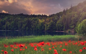 Picture trees, flowers, lake, meadow