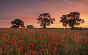 Picture field, summer, sunset, Maki