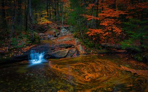 Picture autumn, forest, leaves, water, branches, nature, pebbles, pond, the dark background, stones, trunks, shore, foliage, …