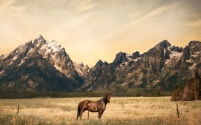 Picture field, forest, the sky, look, clouds, mountains, horse, horse, tops, treatment, texture, pasture, the fence, ...