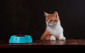 Picture cat, cat, look, pose, the dark background, red, muzzle, bowl, food, Studio