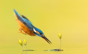Picture nature, bird, color
