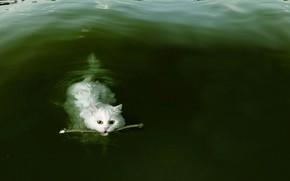 Picture cat, pond, stick, несет палочку, тренерованная, послужная