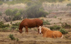Picture nature, two, horses, horse, pair