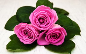 Picture close-up, roses, bouquet, pink, Olena Rudo