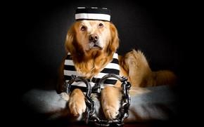 Picture each, dog, prisoner