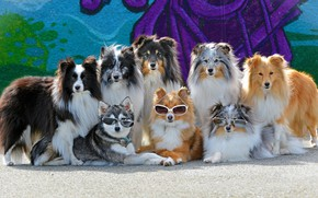 Picture dogs, glasses, gang