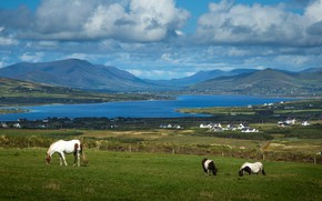 Picture clouds, mountains, hills, shore, horses, horse, pasture, pond, blue sky, grazing
