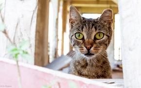 Picture cat, eyes, cat, look, face, light, grey, background, portrait, surprise, balcony, striped, ear, veranda, the …