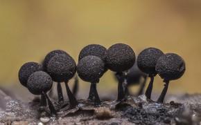 Picture macro, nature, mushrooms, micro world
