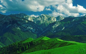 Picture Mountains, Forest, Ranges