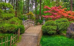 Picture greens, grass, trees, pond, stones, the fence, treatment, garden, track, Washington, USA, the bridge, the …