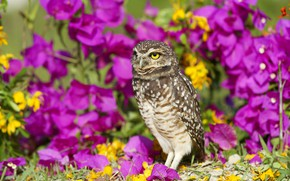Picture summer, flowers, owl, bird, yellow, garden, pink, lilac, bokeh, owl, bougainvillea