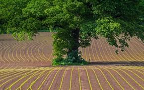 Wallpaper field, Wales, oak, Monmouthshire