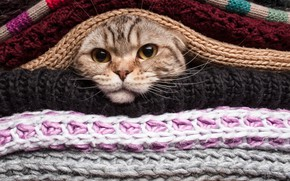 Picture eyes, cat, mustache, cat, cat, knitting