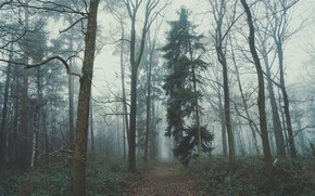 Picture forest, nature, fog, overcast, Belgium, path, Хоггед, Мария-Алтер