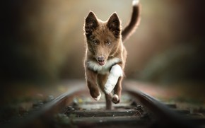 Picture each, dog, running