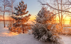 Picture sunset, spruce, frost, pine, Vuoksa