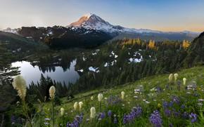 Picture trees, landscape, mountains, nature, lake, slope, USA, grass, national Park, National Park, Mount Rainier, Mount …