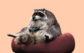 Picture figure, graphics, chair, beast, sitting, plays, Joystick, Raccoon