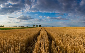 Picture sky, trees, landscape, nature, clouds, wheat, Field, ears