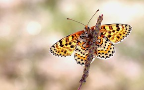 Picture macro, background, pattern, butterfly, plant, stem, insect, wings, yellow, bokeh, Petra