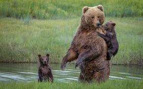 Picture bears, bears, bear