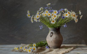 Wallpaper flowers, chamomile, still life, cornflowers