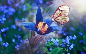 Picture macro, flowers, nature, butterfly, forget-me-nots, anemone