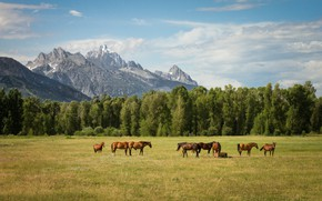 Picture field, forest, summer, the sky, clouds, landscape, mountains, nature, pose, horse, horse, tops, horses, horse, …