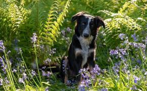 Picture summer, grass, flowers, dog, black
