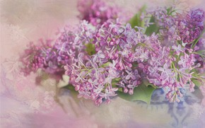Picture flowers, lilac, inflorescence, photoart
