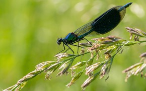Picture macro, dragonfly, spike