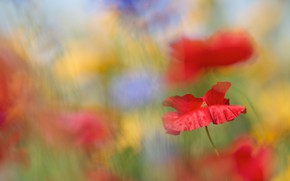 Picture summer, flowers, blue, yellow, background, mood, Maki, blur, red, bokeh