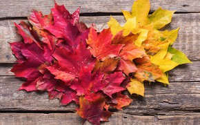 Wallpaper autumn, leaves, background, colorful, maple, wood, background, autumn, leaves, autumn, maple