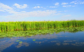 Picture the sky, water, clouds, nature, reflection, reed, water lilies