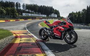 Picture red, Ducati, black, Superleggera V4