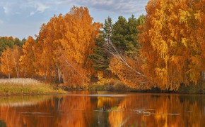 Picture autumn, forest, trees, lake, Russia, Oleg Bogdanov