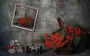 Picture fantasy, the camera, still life, Rowan