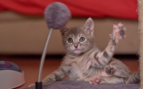 Picture baby, muzzle, kitty, foot, fun
