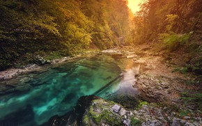 Wallpaper autumn, forest, river