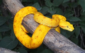 Picture night, snake, branch, yellow