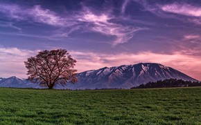 Picture field, the sky, clouds, trees, sunset, mountains, nature, the evening