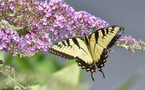 Picture flowers, butterfly, yellow