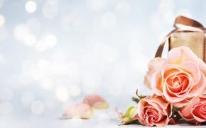 Picture flowers, roses, bouquet, Morganval