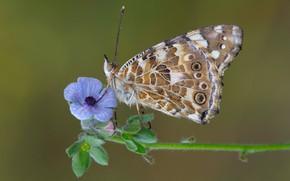 Picture macro, butterfly, flower