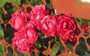 Picture flowers, mesh, roses, 2018, Meduzanol ©